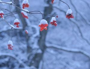 季節のおすすめメニュー</br>*他にも多数ございます
